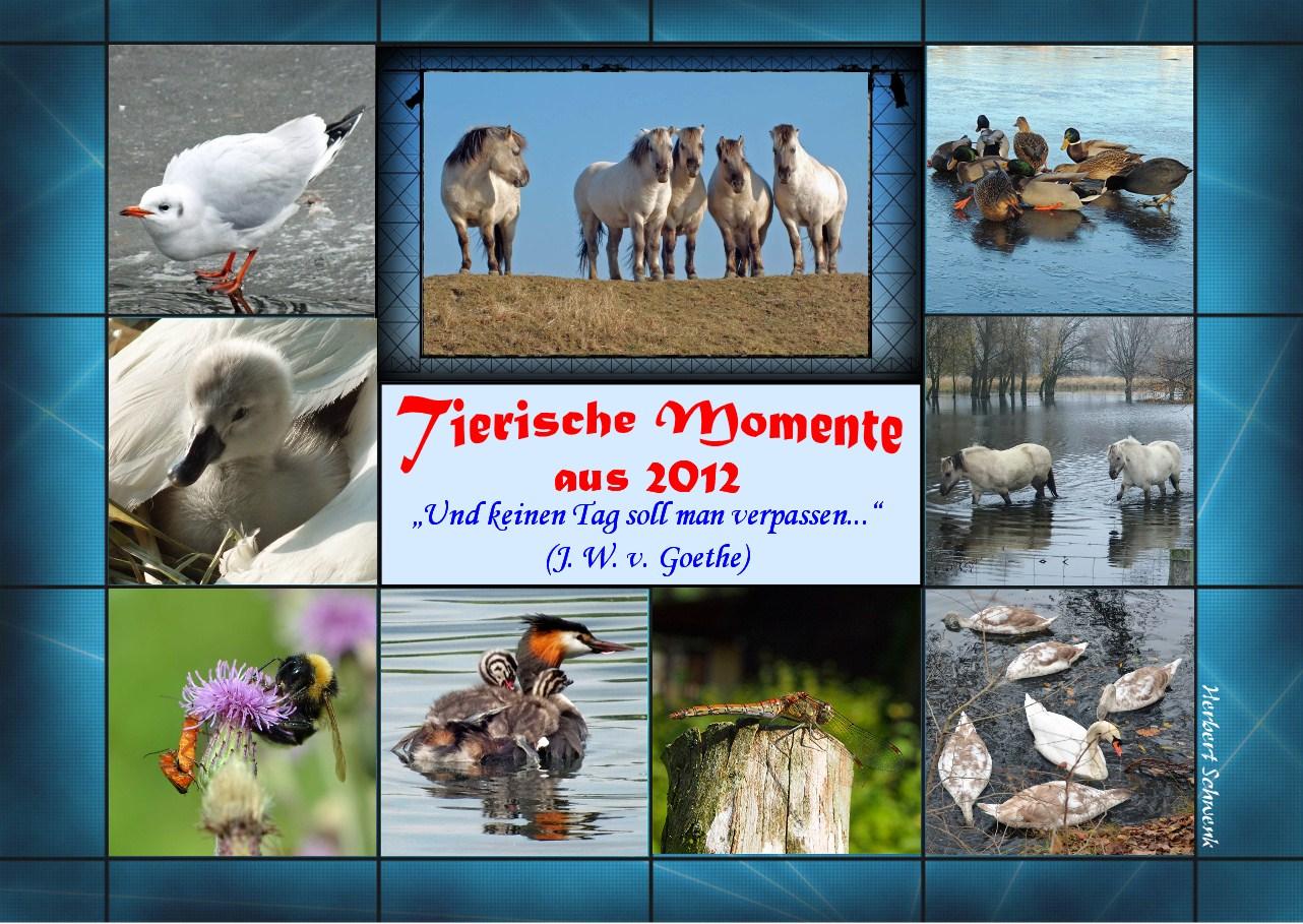 2-Tierische Momente_2012