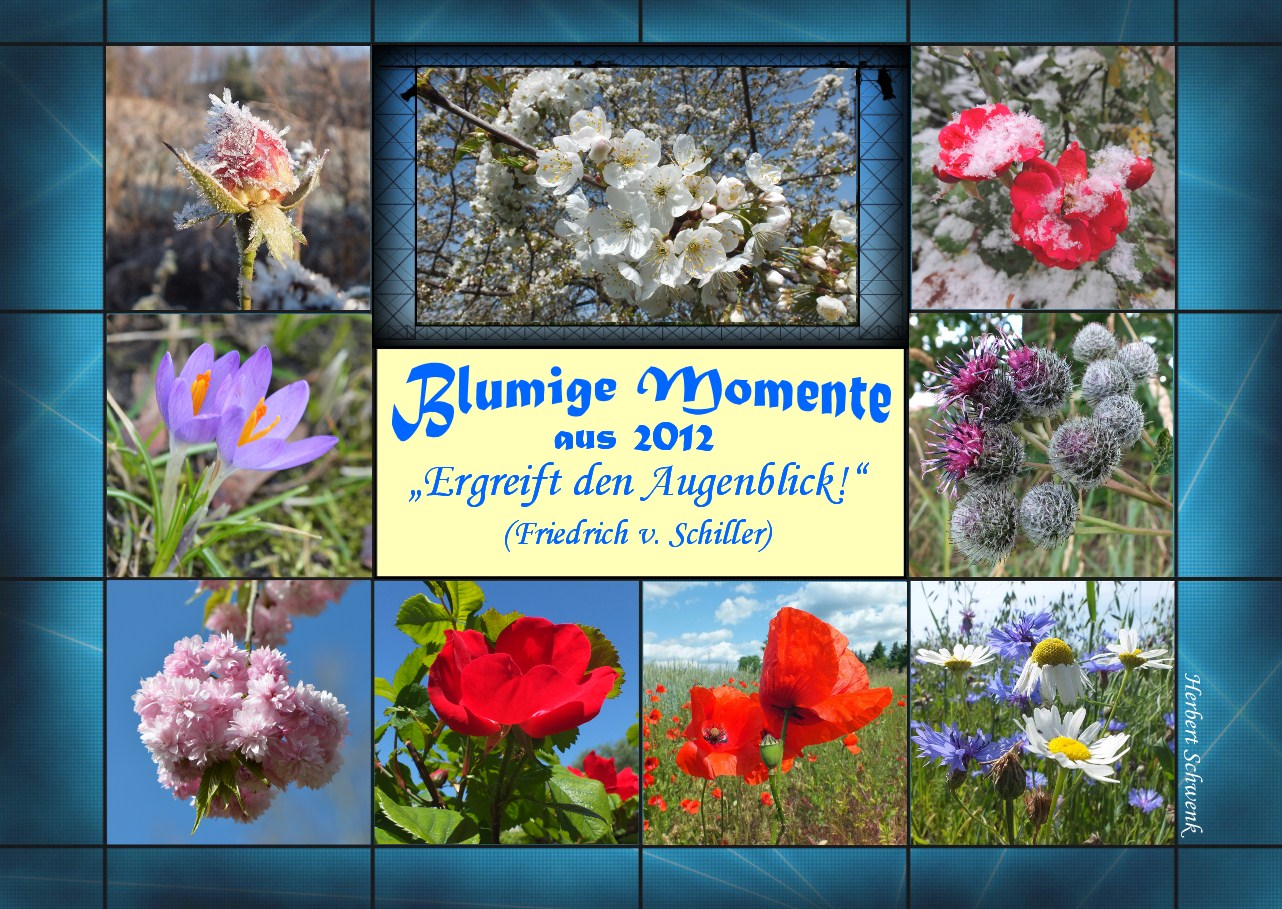 3-Blumige Moment_2012